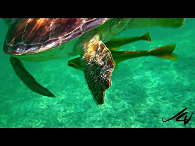 Akumal Bay snorkeling tour - Mayan Riviera