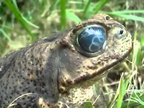 Giardia paggamot kaysa sa mapanganib na