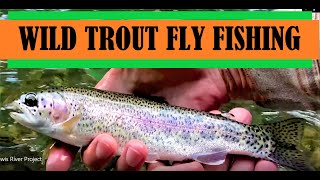 Fly Fishing for Wild Trout in the Lewis River Washington State & Gifford Pinchot National Forest