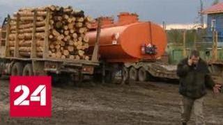 """Масштабное браконьерство: красноярские """"черные"""" лесорубы валят все - Россия 24"""