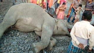 Смотреть онлайн Подборка: животные попадают под поезд