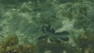 preview picture of video 'Wasini 02 Family Fun Dive'