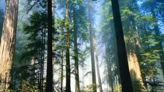 Ebiet G Ade - Senandung Pucuk-Pucuk Pinus