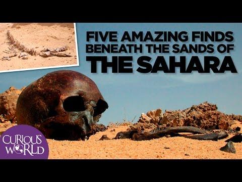 5 Fascinating Scientific Findings In the Sahara Desert