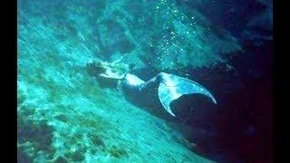被相機拍到!!神秘海底人魚真的存在?