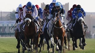 preview picture of video 'Al Hamla Cup Day 16th October 2014'