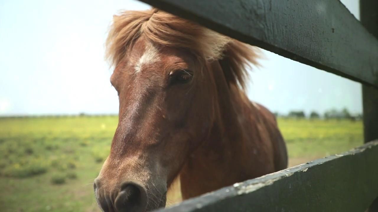 Home   Kentucky Horse Park