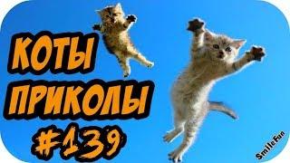 ПРИКОЛЫ С КОТАМИ 2018 с озвучкой на русском языке
