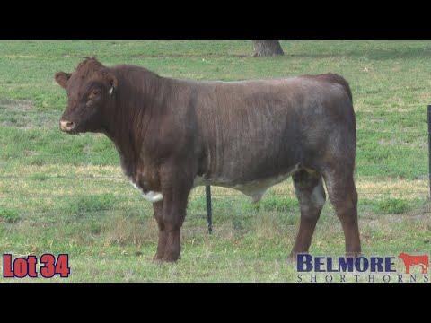 BELMORE OREGON Q157