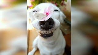 Лучшие приколы с животными 2019. Смешные видео про кошек, смешные коты приколы. Веселые кошки #49