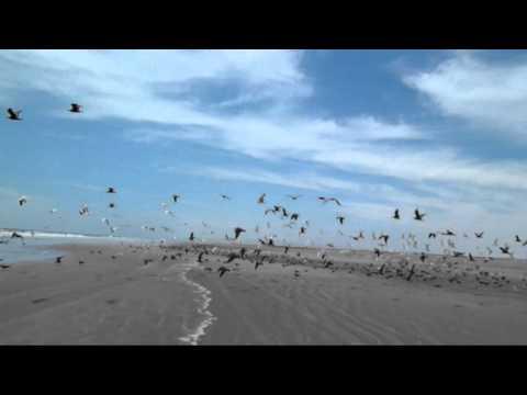 Alex Turner -  Stuck On The Puzzle (Intro)
