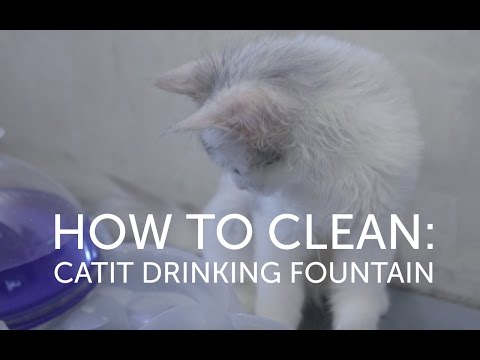 How To Clean Maintain Your Catit Drinking Fountain
