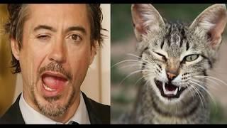 Два сапога пара – Смешные коты  и люди один в один (Кошки похожи на людей 2018)