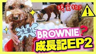 [🐶BROWNIE Growing Diary #2] The first bath reaction? Stole Muffin's food?