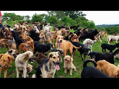 "Territorio de Zaguates ""Land of The Strays"" Dog Rescue Ranch Sanctuary in Costa Rica"