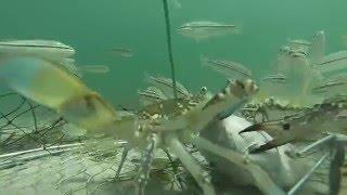 Морские хищники и приманка