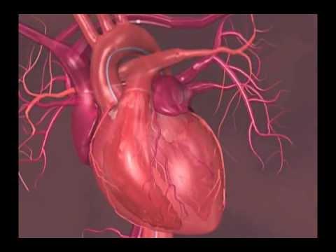 Krevní tlak 70 - 70