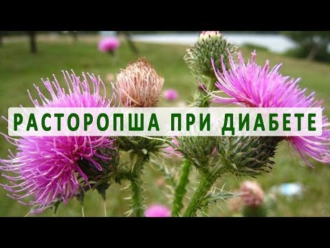 Сибирская здоровье для похудения отзывы