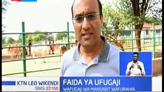 Wafugaji wa Marsabit wafurahia kuhusu mifugo wao kuongezeka kwa uzani