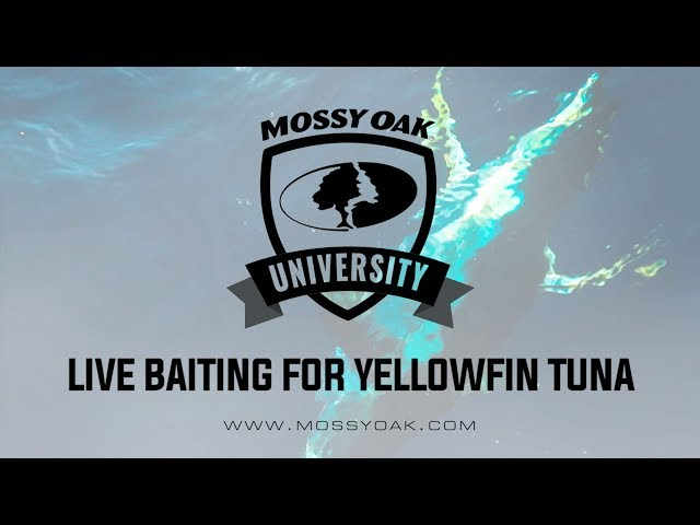 Offshore Fishing: Live Baiting for Tuna | Mossy Oak