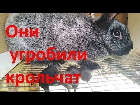 КОШМАР который можно УВИДЕТЬ только во сне % КРОЛЬЧИХИ загубили крольчат