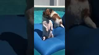 Silly Doggo Enjoying the Pool #shorts