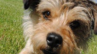 Best Friends Animal Society - Skipper's Adoption Story