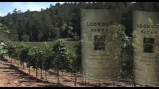 Sonoma Wine-Sebastiani, Klein, More..