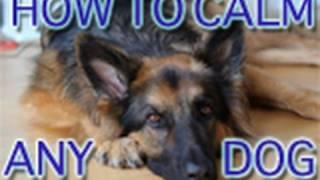 Dog Training Tutorial: Greeting Visitors Calmly!