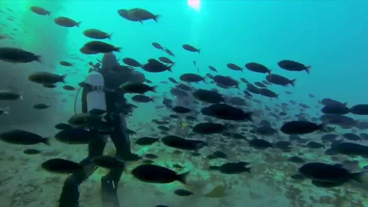 Dive Show Trailer