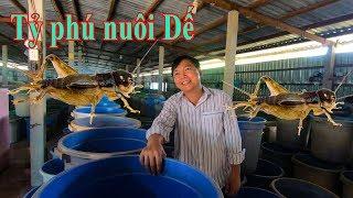 Nông Dân Thành Tỷ Phú Nhờ Nuôi Dế ở Sài Gòn | Trang Trại Dế Thanh Tùng
