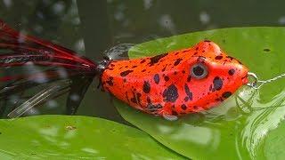 Приманка для щук лягушка