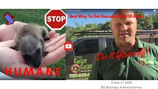 UPDATED-Stop Trapping Raccoons In Attics- Forever! Most Humane*Professional Advice]