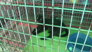 preview picture of video 'Ban Maeo Thai Boran, Siamese Cat House, Samut Songkhram, Thailand'