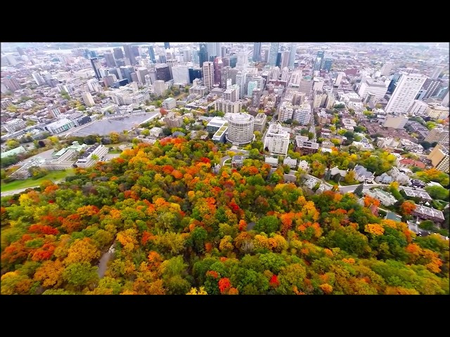 Aerial-view-mount-royal-park