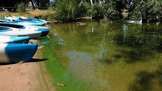 Explaining blue-green algae