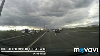 Лось спровоцировал ДТП на трассе