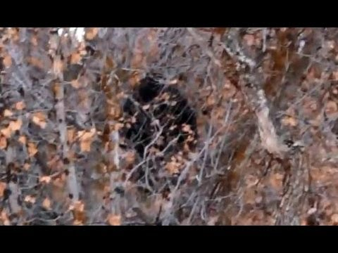 Hikers Catch Bigfoot on Camera in Provo Canyon, Utah