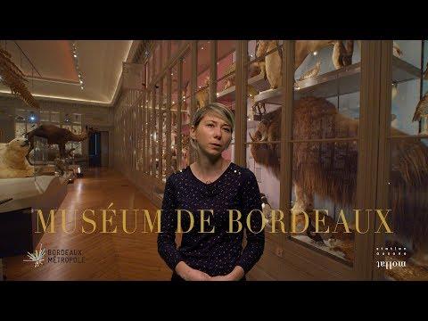 Laura Exposito Del Rio - Le Nouveau Muséum de Bordeaux