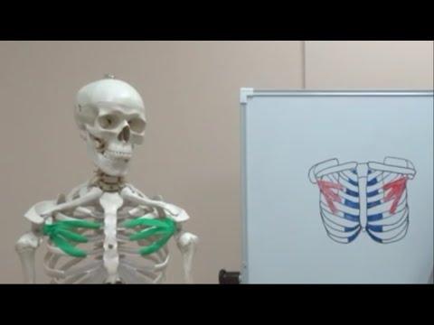 Клиника лечения суставов москва