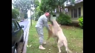 Собаки встречают хозяев из армии