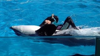 Amazing orcas and trainers in training at KAMOGAWA SEAWORLD, Japan part 2