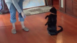 Cat Training: Sit, Stand, & High Jump