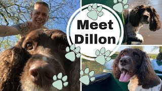 Meet Dillon the Springer Spaniel and how he loved being on a Canal Narrowboat.