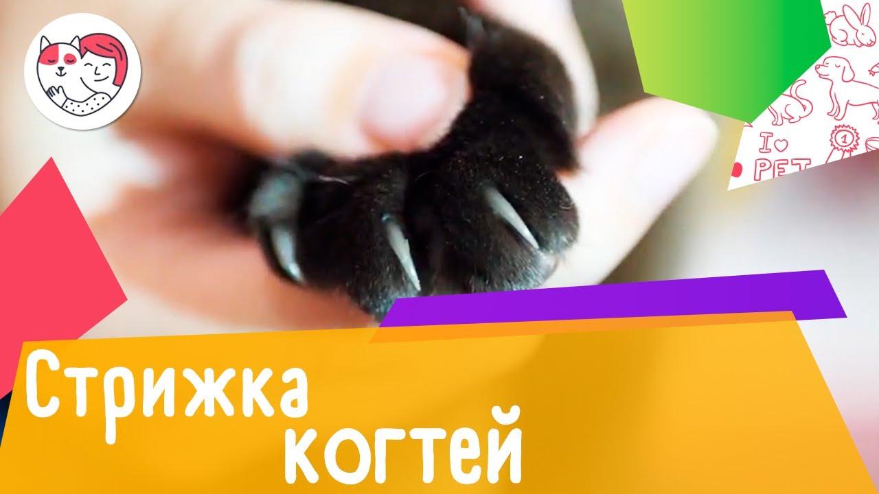 6 советов для стрижки кошачьих когтей