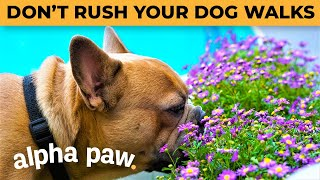 Why You Shouldn't Rush Your Dog On Walks