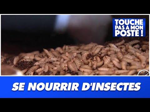 Va-t-on bientôt se nourrir d'insectes ?