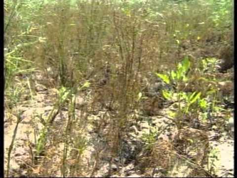 تقرير عن زراعة الشمار
