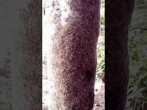 Bulating parasito, bituka parasites