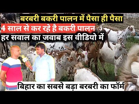 Goat farming कर रहे है 4 सालों से नए पालक को जरूरी हैं जानना| बेहतर ब्रिड का चुनाव कर कमा रहे लाखो